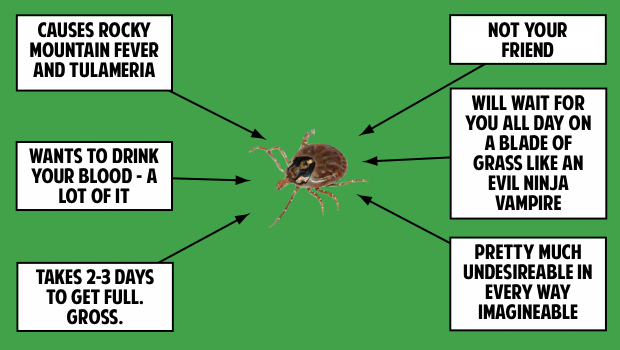How To Remove Wood Ticks