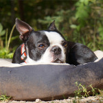 6 Tips For Camping With Dogs