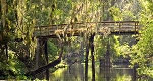 Hillsborough River State Park Bridge