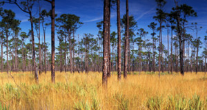 Jonathan Dickinson State Park Trees