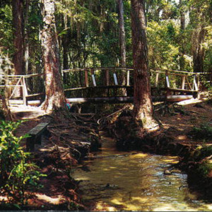Mike Roess Gold Head Branch State Park in Florida