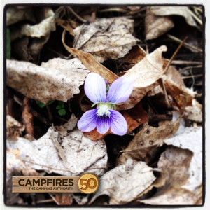 Frontenac_State_Park_Spring_Bloom_Camping_Hiking