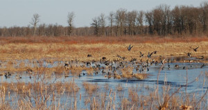 Crex Meadows Wildlife Area