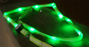 nite beams LED pet leash