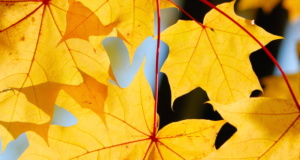Preserving the beauty of fall leaves is easy with materials you likely have around home.