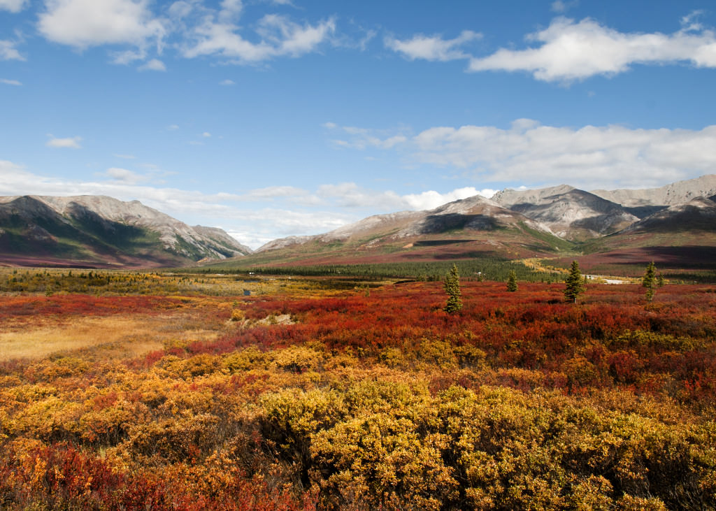 alaska denali denali essay in national park photographic preserve The primary objective of this project is to establish a photographic baseline for systematic monitoring and analysis of natural and cultural changes in the viewshed of denali national park and preserve, alaska.