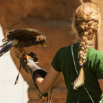 Outdoor Activities: Falconry