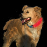 Camping Gear For Dogs: Lights
