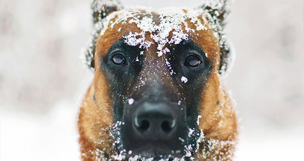 Keep_Your_Dog_Happy_In_The_Cold