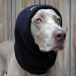 Winter Dog Gear: Chilly_Dogs_Head_Muff