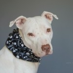 Winter Dog Gear: Sirius_Republic_Fleece_Snoods