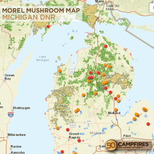 Morel Mushroom Hunting Map 2015 Bing images