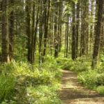 LL_Stub_Stweart_State_Park_Camping_Portland 25 best campgrounds within 2 hours or portland oregon