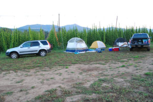 Highwire Hop field camping