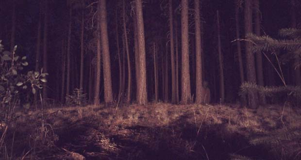 He panicked, grabbed his headlamp, and set off into the woods, not knowing what else to do.