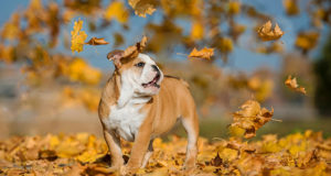 8 Tips for Managing Fall Dog Allergies
