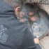 Using a burger basket allows easy and infinite adjustment when cooking burgers over a campfire.