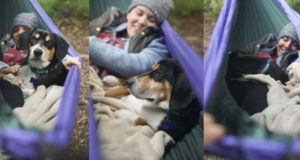 Three shots together of dog and owner snuggled in a hammock on a camping trip.