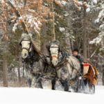 Grand View Lodge Sleigh Rides In Minnesota