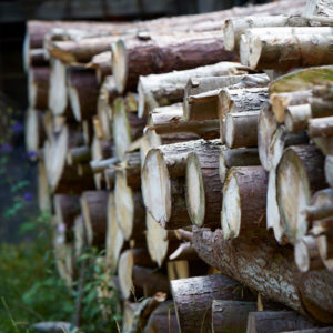 Use Your Senses To Select Firewood