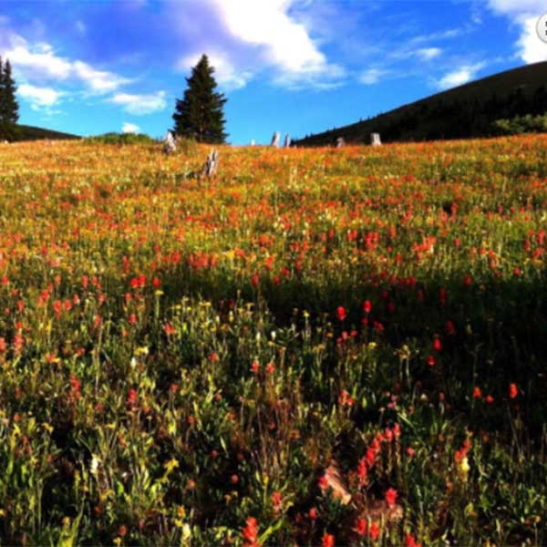 outdoor lovers are sure to love Sugar Loafin' RV Campground and Cabins in Colorado