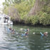 you too can swim with the manatees courtesy of River Ventures.