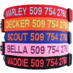 embroidered dog collars in bright colors available on Amazon