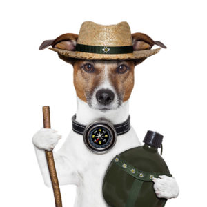 illustration of Jack Russell Terrier dressed up as a camper