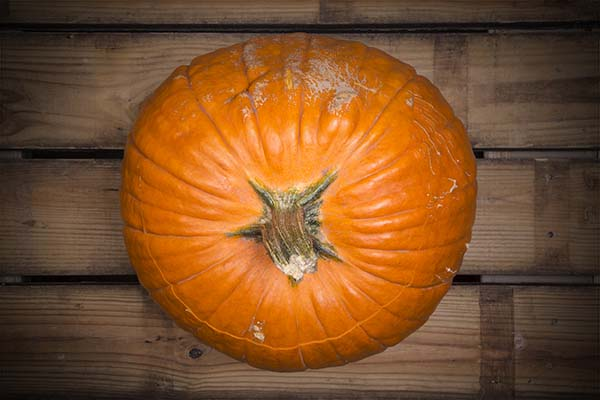 Carefully chosen pumpkin for stuffing. Just the right size.