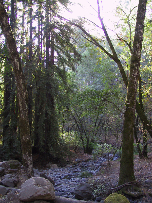 Bothe-Napa Valley State Park