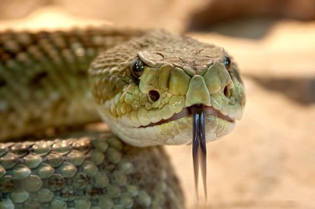 dangerous animals snakes