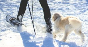 snowshoeing with a dog